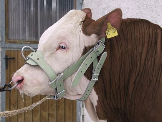 Fotografija proizvoda Ular za bikove