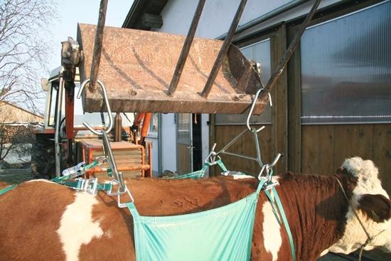 Fotografija proizvoda Naprava za podizanje krava