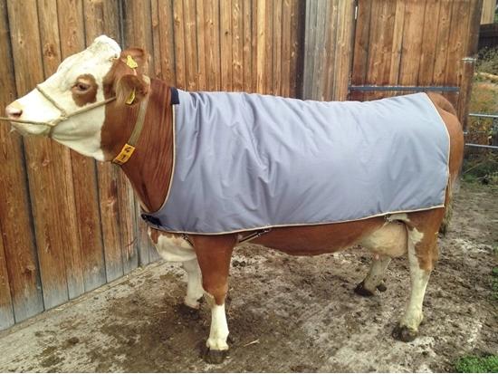 Fotografija proizvoda Deka za krave 155 cm