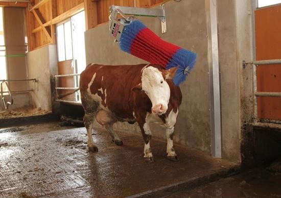 Fotografija proizvoda Stroj za čišćenje krava HAPPYCOX Swing