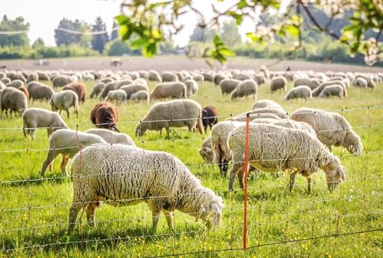Fotografija proizvoda Mreža za ovce (90 cm - 50 M) sa dvostrukim vrhom