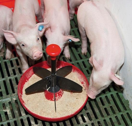 Fotografija proizvoda Hranilica za male svinje