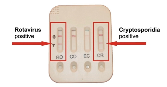 Fotografija proizvoda Test za proljev teladi
