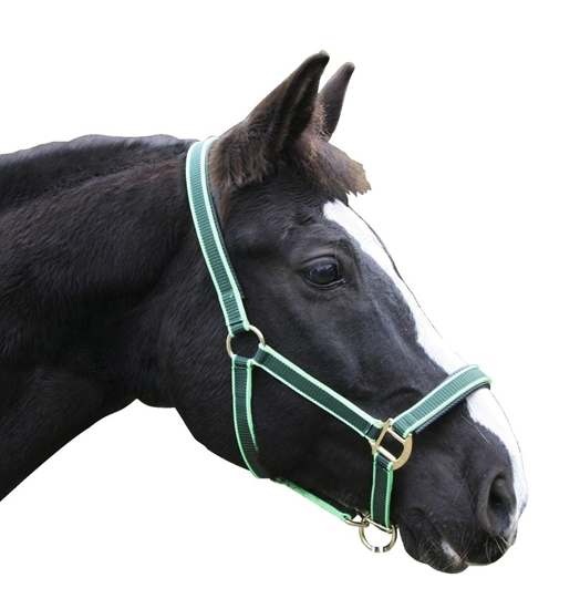 Fotografija proizvoda Ular za konje Exclusive vel 4, zeleni