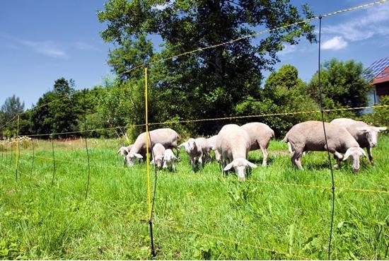Fotografija proizvoda Mreža za ovce (105cm - 50 M)