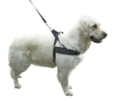 Ovratnik za psa  MIAMI, 80 - 100 cm