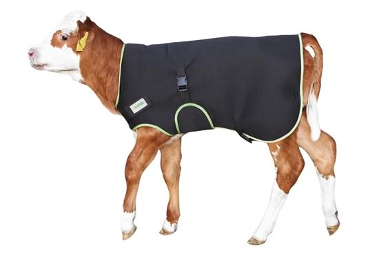 Premium deka za telad 80 cm