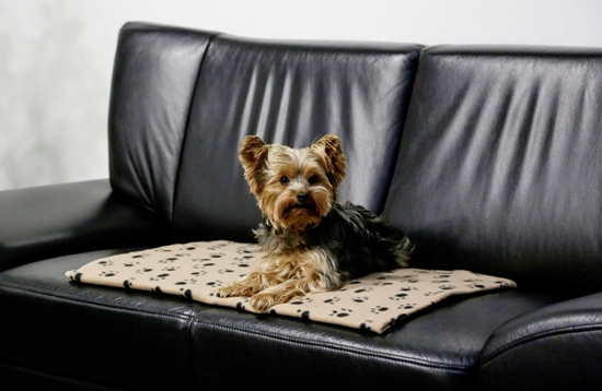 Deka za pse Stella 140 x 100 cm
