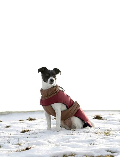 Kaputić za pse Royal Pets M