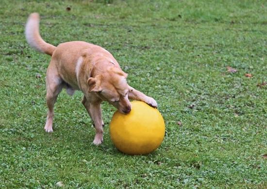 Lopta za igranje 30cm