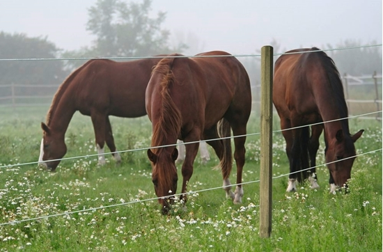Premium Horse Žica za konje 250m