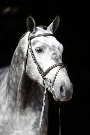 Uzde Standard-za Pony