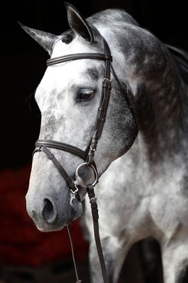 Uzde Standard-odrasli konj