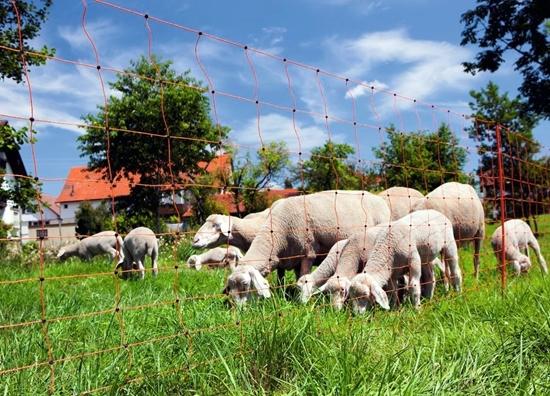Mreža za ovce OviNet  s dvostrukim vrhom: 25m-90cm