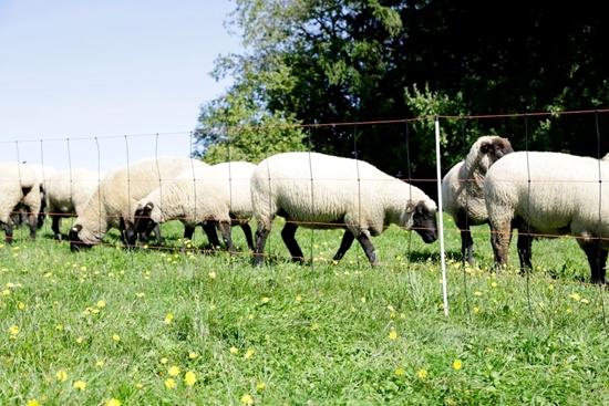 Mreža za ovce TitanLight s jednostrukim vrhom: 50m/108cm