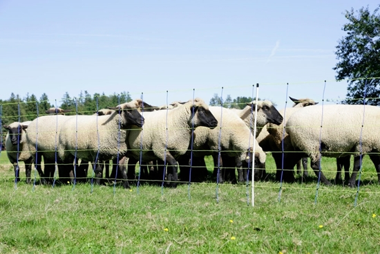 Mreža za ovce TitanPro sa jednostrukim vrhom:50m/90cm
