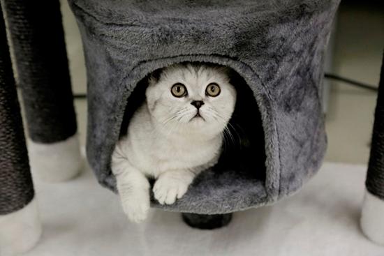 Grebalica za mačke Darklight