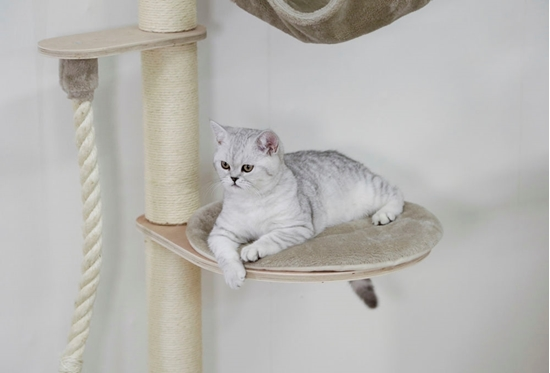 Grebalica za mačke Dolomit Grappa