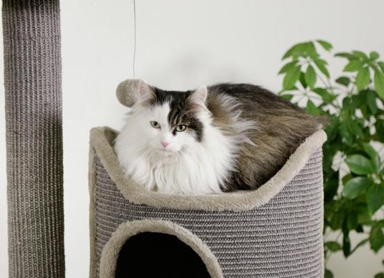 Grebalica za mačke Tiana