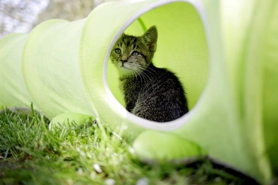 Tunel za mačke duljine 170cm