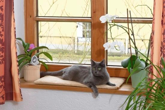 Jastuk za prozor
