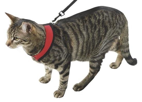 Crveni ham za mačke