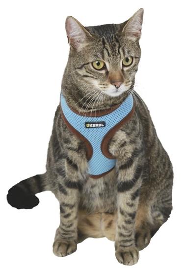 Plavi ham za mačke